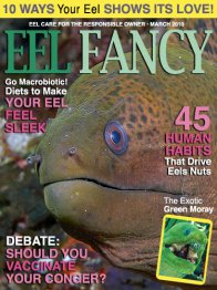Eel Fancy