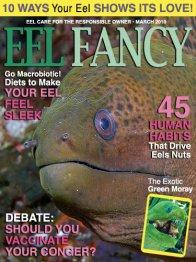 Eel Fancy